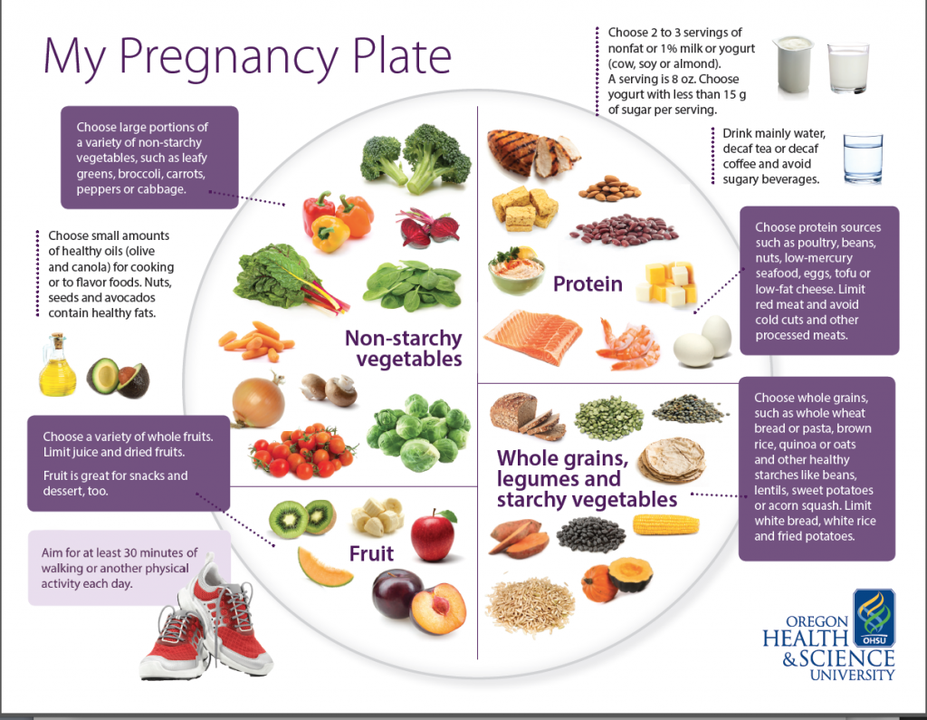 my pregnancy plate a blueprint for healthy eating during pregnancy