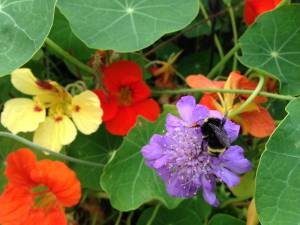 A bumblebee sits in a selection of purple, red and yellow flowers