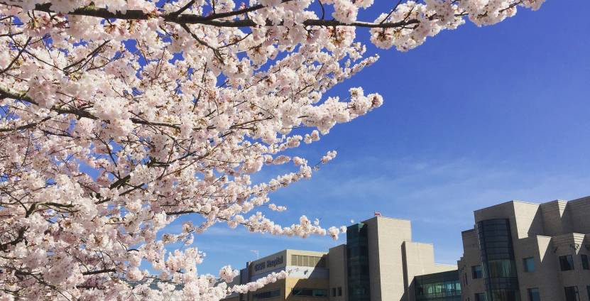 Cherry blossom branches in foreground, OHSU campus and blue sky in background