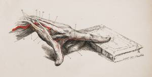 An engraving depicts an anatomical drawing of a hand, including veins and arteries, pointing to a book.