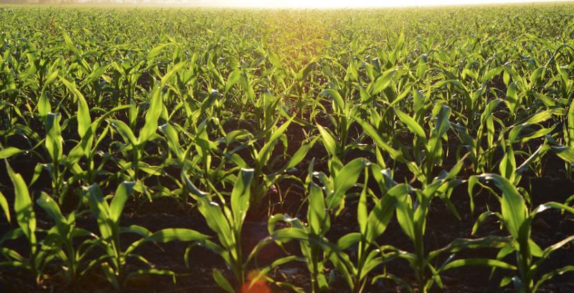 Farm stock photo of field