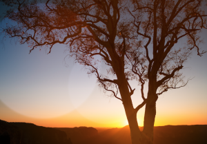 Opioids in the workplace podcast episode, a tree at sunset