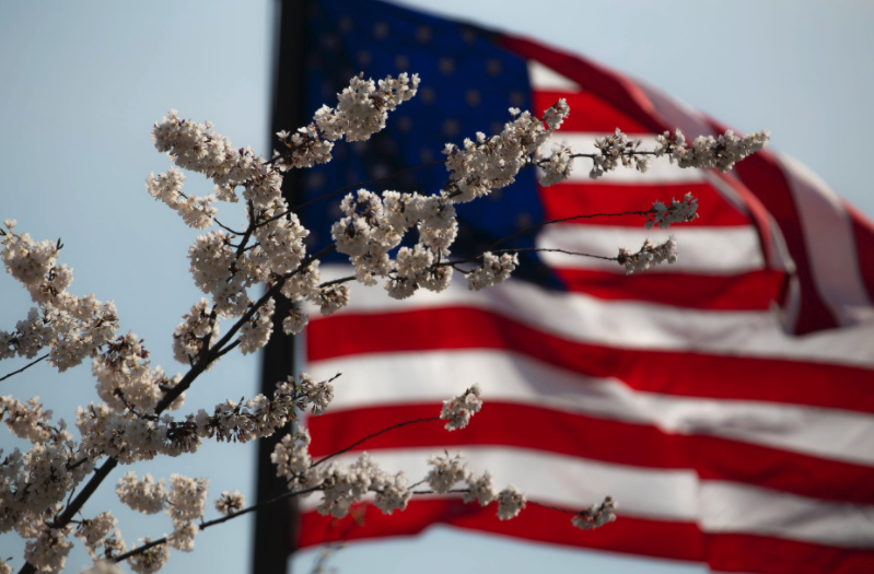 American flag with cherry blossoms