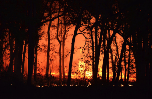 Photograph of wildfire