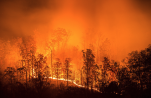 Impacts of COVID 19 and Wildfire Smoke