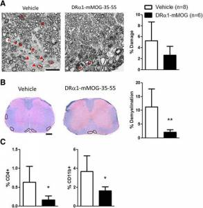High dose of DRα1-mMOG-35-55 reduces demyelination and leukocyte infiltration in female mice with chronic EAE.