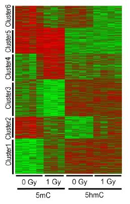 Unsupervised K-means clustering reveals distinct patterns of 5hmC and 5mC regulation.