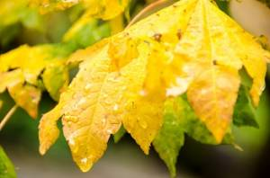 Autumn leaves and precipitation! October is here.
