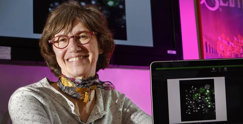 Gail Mandel, Ph.D.