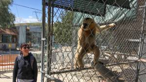 Carbone and the gibbon Lucia, named for her, at the Gibbon Conservation Center in Santa Clarita, CA