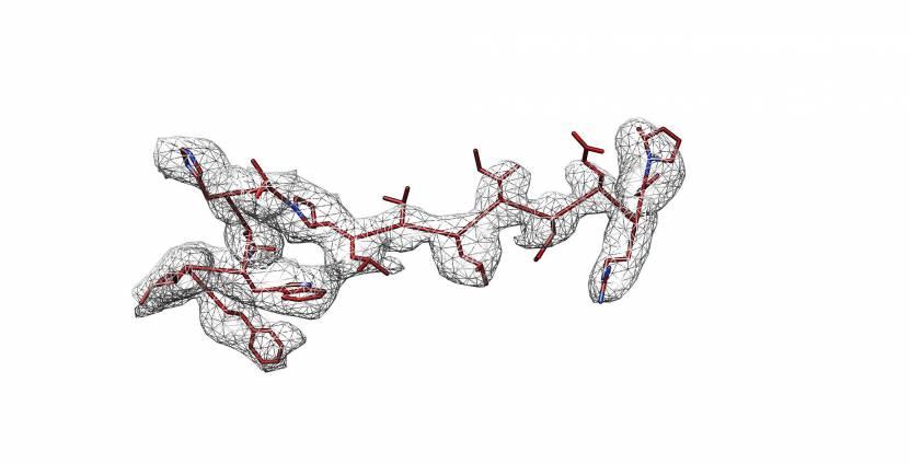 Δβ ENaC subunit model shown in stick representation2